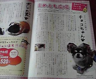 チョコちゃん.jpg