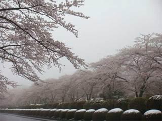 冨士霊園4.jpg