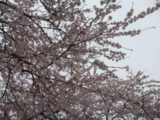 冨士霊園5.jpg