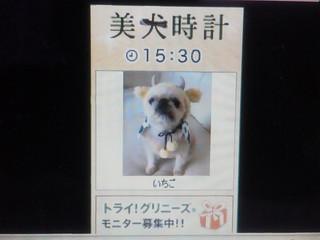 美犬時計.jpg